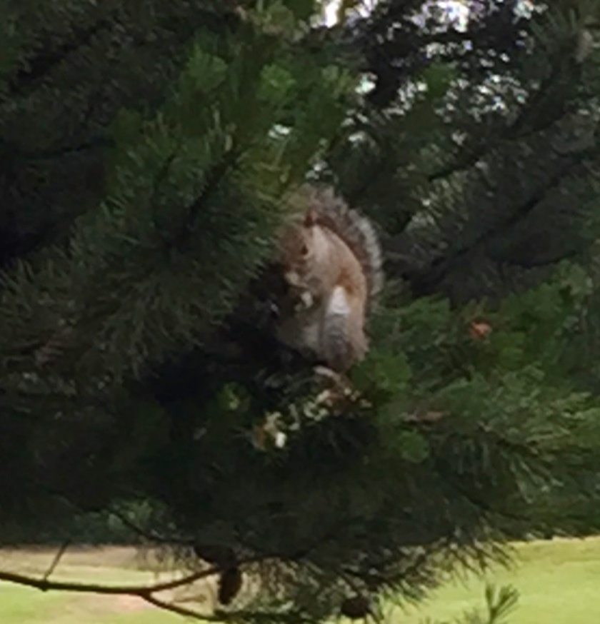 Slightly better pic of the squirrel??